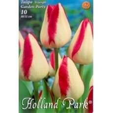Tulipa Triumph - Garden Party