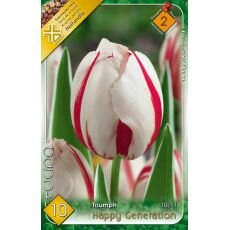 Tulipa Triumph - Happy Generation