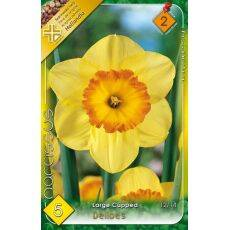 Narcissus Large Cupped - Delibes