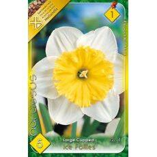 Narcissus Large Cupped - Ice Follies
