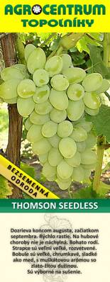 Thomson Seedless